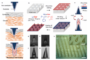 A Bio-Inspired Swellable Microneedle Adhesive for Mechanical Interlocking with Tissue.jpeg